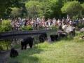 furuvik_djurpark_24