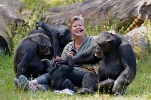 Ing-Marie Persson och schimpanserna